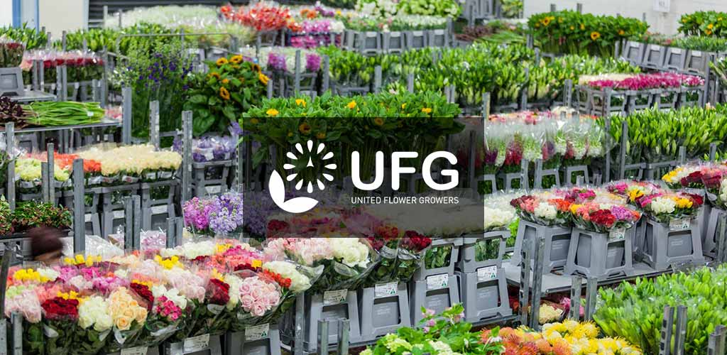 UFG Auction – Engineering Digital Auctions